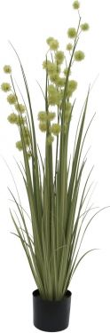 Europalms Allium Grass, 122cm