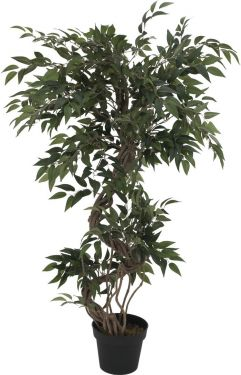 Europalms Ficus multiple spiral trunk, 130cm