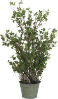 Europalms Evergreen shrub 120cm