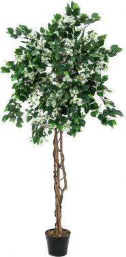 Europalms Bougainvillea, white, 180cm