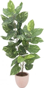Europalms Pothos, 3 trunks, 150cm