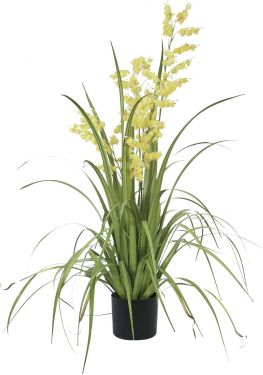 Europalms Bellflower, yellow, 105cm