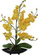 Europalms Orchid Arrangement EVA, yellow