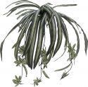 Europalms Spider plant, 60cm