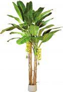 Europalms Banan Palme , 440cm