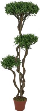 Europalms Bonsai tree, multi trunk, 130cm