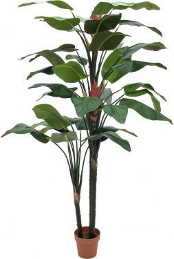 Europalms Bird-of-paradise flower, 220cm