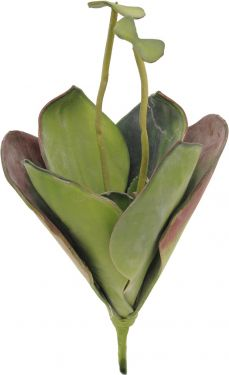Europalms Water Lily (EVA), closed, green, 45cm