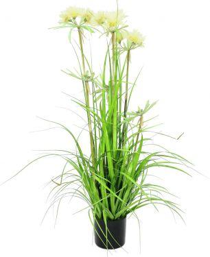 Europalms Star grass, 120cm