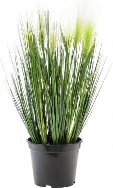 Europalms Feather grass, white, 60cm