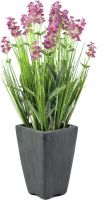 Europalms Lavender, rose, in pot, 45cm