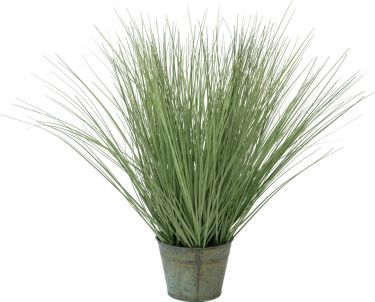 Europalms Ornamental grass, 65cm