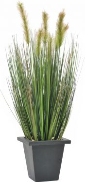 Europalms Moor-grass in pot, 60cm