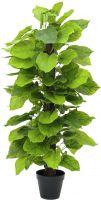 Europalms Pothos plant, 125cm
