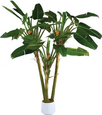 Europalms Bird-of-paradise palm, 250cm
