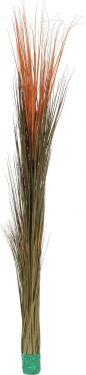 Europalms Reed grass, light brown, 127cm