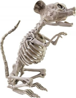 Europalms Halloween Skeleton Rat, 32x10x16cm