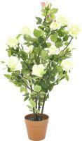 Europalms Rose shrub, cream, 86cm