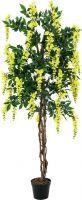 Europalms Wisteria, yellow, 150cm