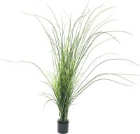 Europalms Reed grass. 145cm