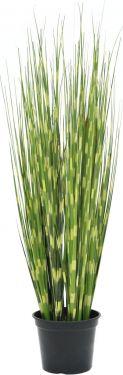 Europalms Zebra grass, 90cm