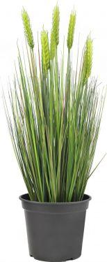 Europalms Wheat early summer 60cm