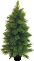Europalms Mini fir tree, 90cm