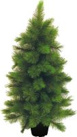 Europalms Mini fir tree, 90cm