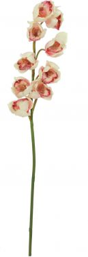Europalms Cymbidium spray, cream-pink, 90cm