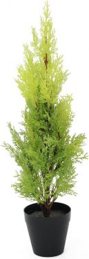 Europalms Cypress, Leyland, 60cm