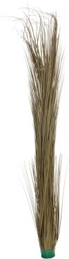 Europalms Reed grass, khaki, 127cm