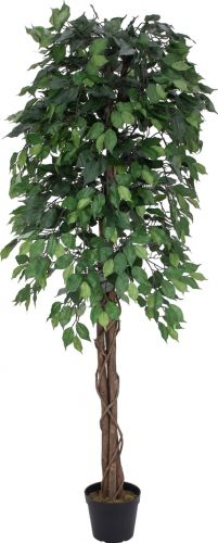 Europalms Ficus Tree Multi-Trunk, 180cm