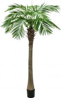 Europalms Phoenix palm tree luxor, artificial plant, 210cm
