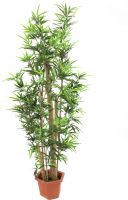 Europalms Bamboo with natural stalks, artificial plant, 205cm