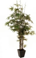 Europalms Bamboo black trunk, artificial plant, 240cm