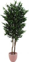 Europalms Olive tree with fruits, 2 trunks, 165cm