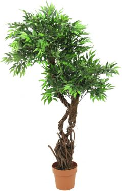 Europalms Willow, 145cm